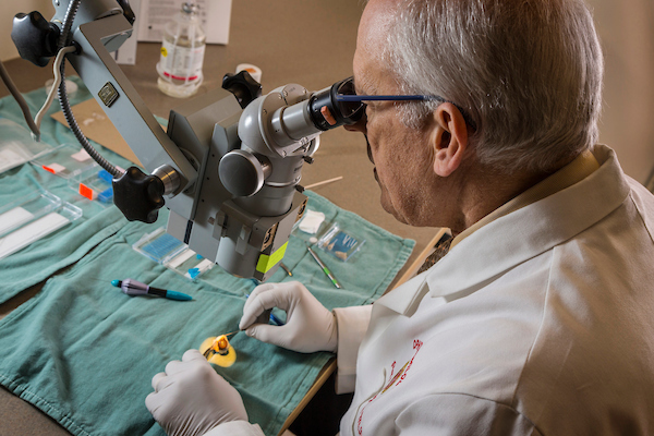 Dr. Paul Kaufman dissecting an eye in preparation for placement of a prototype device into Schlemm's canal, for injection of a viral vector containing a gene that may reduce the eye's resistance to fluid drainage. The resistance reduction reduces the pressure inside the eye. Higher pressure may damage the optic nerve that conducts visual impulses from the eye to the brain. The injected gene may thus be therapeutic for glaucoma. Photo Dec. 19, 2016. (Photo © Andy Manis)